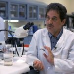 Mosquitoes: lab abuzz with disease detectives