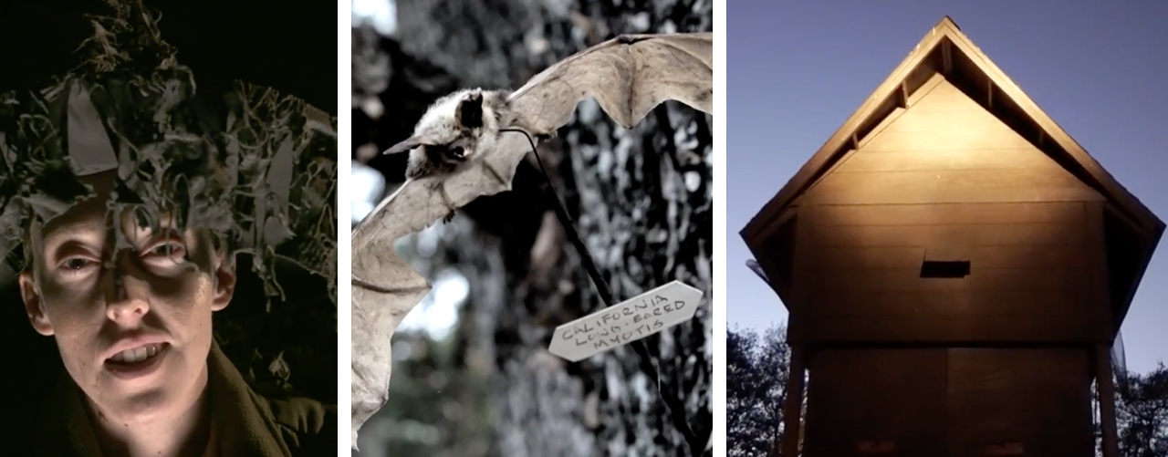 Bats Motel: A juicy Halloween tale from Calero Park